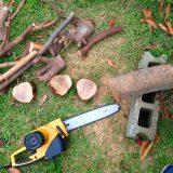 材料の木の枝